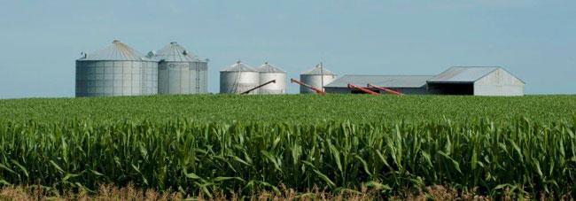 corn field with grain bins and barns