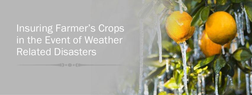 Insuring Farmer's Crops